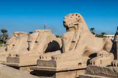 Karnak temple, Luxor, Egypt. Ram statue at the gate of the Karnak temple (Ancient Thebes with its Necropolis), the main place of worship of the eighteenth stock photo