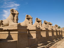 Karnaktempel Stock Foto