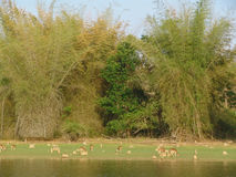 karnataka της Ινδίας nagarhole nationalpark Στοκ Φωτογραφία