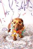 Karnevalhundparti royaltyfri fotografi