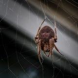 Karolina Wilczego pająka Żeński pająk dalej jest ` s siecią Fotografia Stock