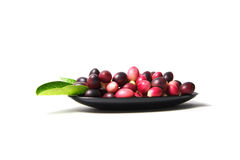 Karonda或Carunda FruitsCarissa carandas L 在空白背景 库存图片