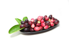 Karonda或Carunda FruitsCarissa carandas L 在空白背景 免版税库存照片