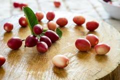Karonda, φρέσκων και juicy φρούτα Carunda ή που μπορούν να χρησιμοποιήσουν για να είναι αυτή Στοκ Φωτογραφίες