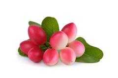 Karonda eller Carunda frukter, tropiska frukter från South East Asia Royaltyfria Bilder