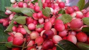 Karonda fruits Royalty Free Stock Image