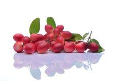 Karonda frukt Arkivfoton