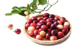 Karonda ou o carunda frutificam na bandeja de madeira, isolada imagens de stock