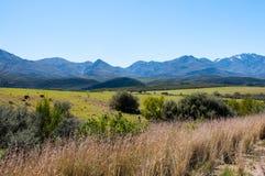 Karoo Foto de Stock Royalty Free