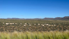 Karoo in summer Stock Images