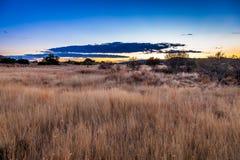 Karoo trawiasty teren Zdjęcia Royalty Free