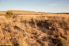Karoo trawiasty teren Obraz Stock