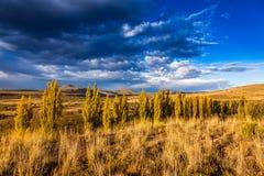 Karoo veld Stock Foto