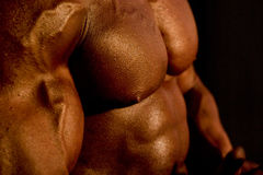 Karosserie des Bodybuilders Lizenzfreies Stockbild