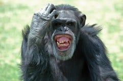 Karosserien-Sprache Lizenzfreies Stockfoto