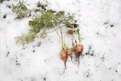 Karotte im Winter Stockbild