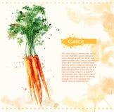 Karotte Rohes Gemüse Lizenzfreie Stockfotografie