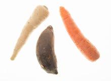 Karotte Rote-Bete-Wurzeln und Parsleyroot Stockfoto