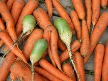 Karotte und Rettich Stockfoto