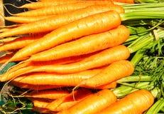 Karotten Stockfoto