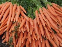 Karotten Stockbilder