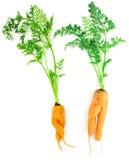 Karotten als Junge und Mädchen Lizenzfreie Stockfotos