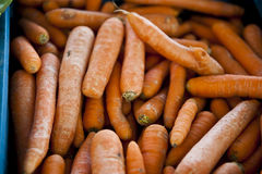 Karotten-Bündel lizenzfreie stockfotos