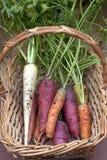 Karotten in einem Korb. Stockbild