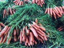 Karotten für Verkauf an einem souk Markt in Agadir, Marokko, Afrika stockfotografie