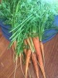 Karotten frisch vom Garten Lizenzfreies Stockbild