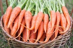 Karotten mit grünem Blatt Stockfotos