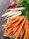 Karotten und Rettich Stockfoto