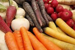 Karotten und Rettich Stockfotografie