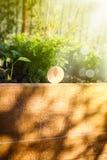 Karottensprösslinge an einem sonnigen Tag lizenzfreies stockbild