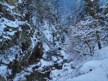 Karpacki las, góry, rzeka, natura, dziki życie, zima, śnieg Zdjęcia Stock