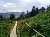 Karpackie góry, drewniana ścieżka Obraz Stock