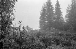 Karpaten- Berge auf einem nebeligen Tages-Trieb auf Schwarzweiss--fil Lizenzfreie Stockfotografie