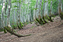 Karpatenberge und Wald lizenzfreie stockfotografie