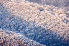 Karpatengebirgsgefrorene Hügel Lizenzfreie Stockfotografie