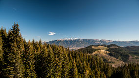 Karpatenwälder stockbild