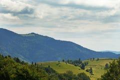 Karpatenwaldsonniger Tag in Ukraine Lizenzfreies Stockbild