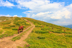 Karpatenweidenpferde Stockfotos