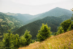 Karpathian高地美好的风景  图库摄影