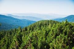 Karpathian średniogórza Fotografia Royalty Free