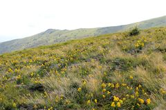 Karpatisch bergenlandschap Stock Fotografie