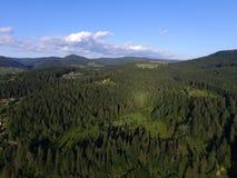 Karpatisch bos stock fotografie