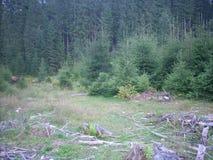 Karpatisch Forest Carpathian Royalty-vrije Stock Afbeelding