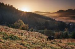 Karpatische bergen Dawn de zon, paarden weidt op de heuvels in de mist Royalty-vrije Stock Foto