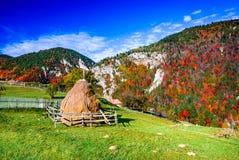 Karpatische Bergen, de Herfstlandschap in Magura Stock Afbeeldingen