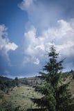 Karpatische bergen, de Oekraïne Stock Foto's